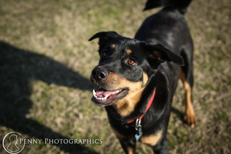 Bella Pet Dog Portraits-Zilker Park Austin