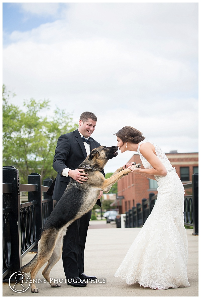 Pet First Look good boy and bride